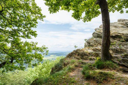 Weitblick über den Taunus mit Fels und Baum im Wald.