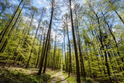 taunus wald blick sonne sommer grüne blätter