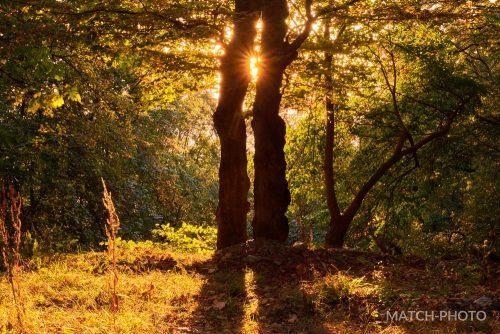 bäume wald sonne abend