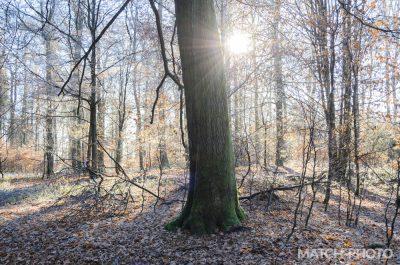 winter im taunus. frost auf den bäumen.