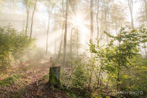 herbstnebel in wald mit morgensonne und sonnenstrahlen