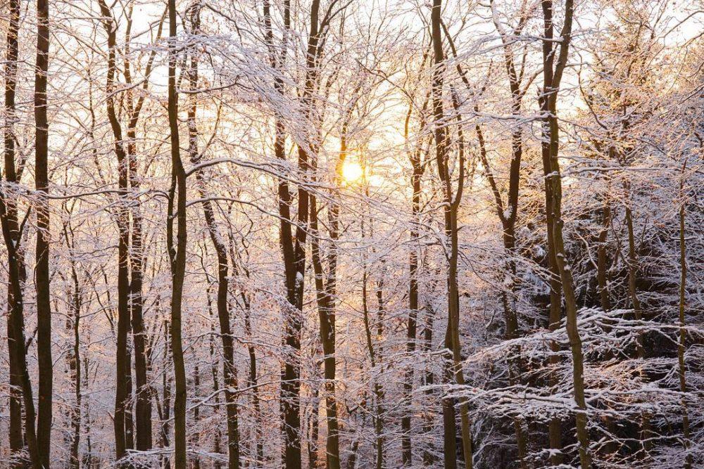 sonnenuntergang im schnee hinter bäumen im wald