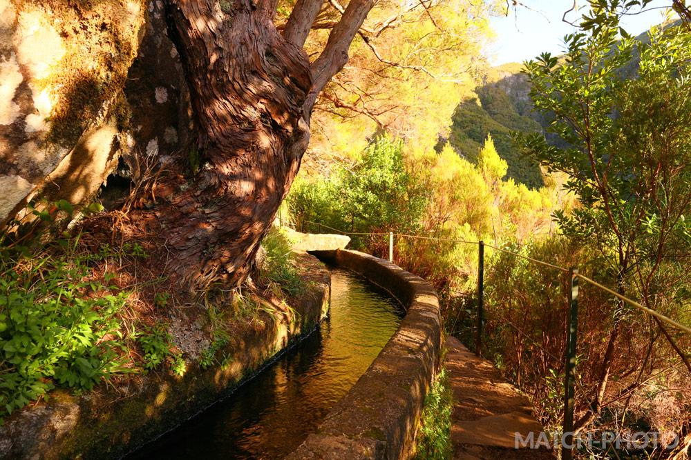 In der Sonne leuchtender Wald. Blick vom Wanderweg.