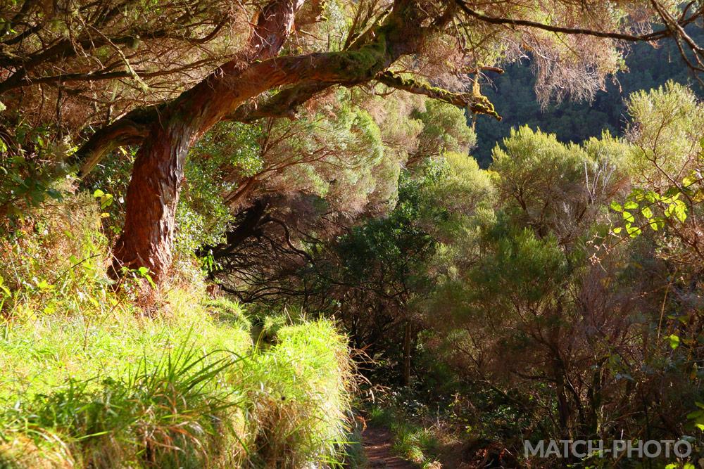 Frisches Gras in der Nachmittagssonne. Wandern durch die Natur.