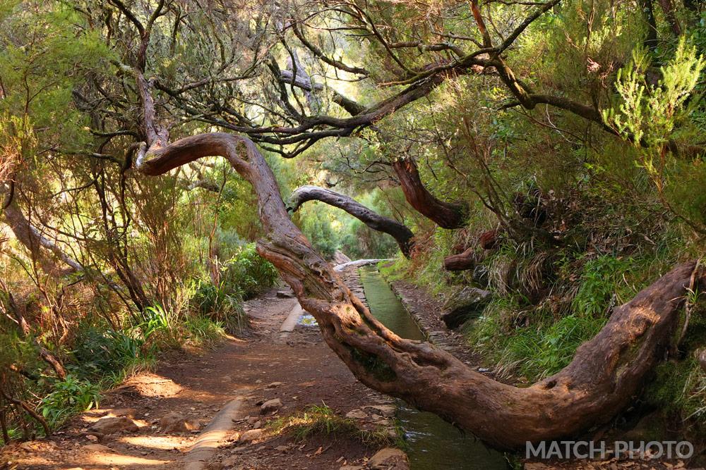 Von Bäumen zugewachsener Wanderweg. Verwogene Bäume.