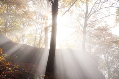 fog in the forest in autumn