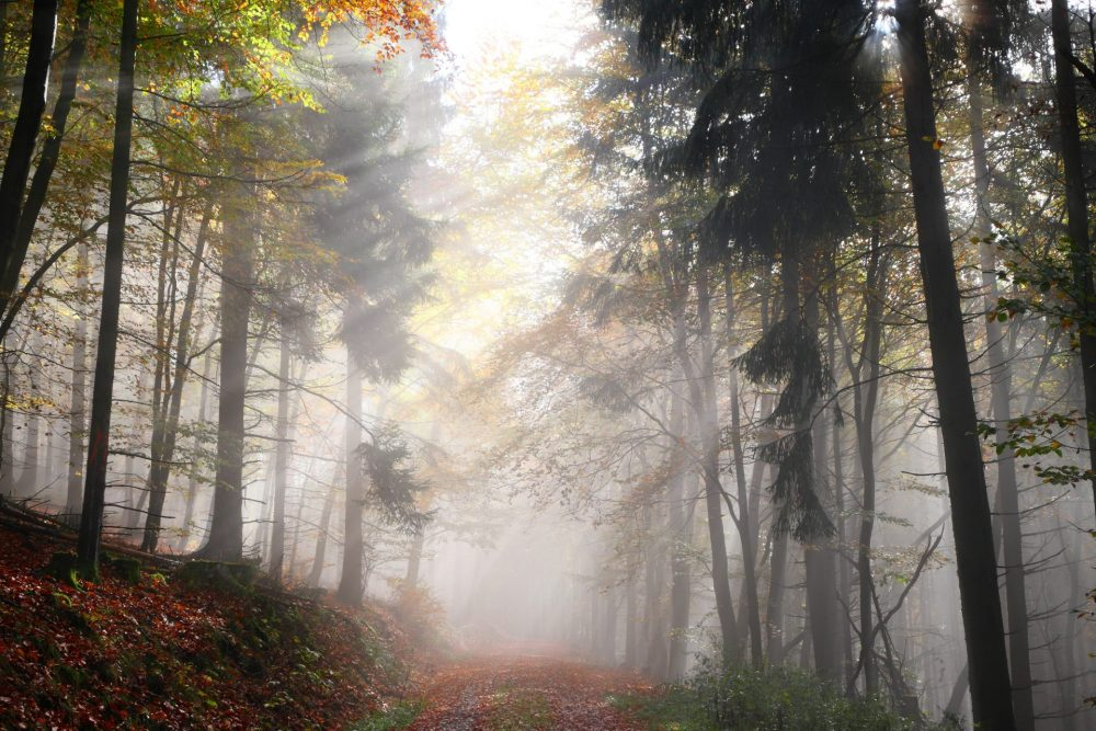 herbst wald nebel sonne sonnenstrahlen