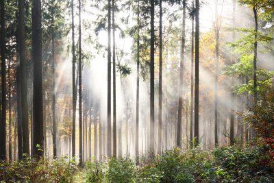 sonnenstrahlen durch den nebel im herbstwald